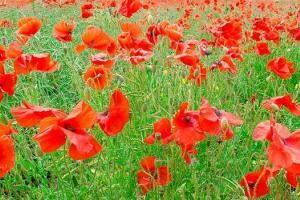 Remembrance and war topic books for children in KS1 and KS2