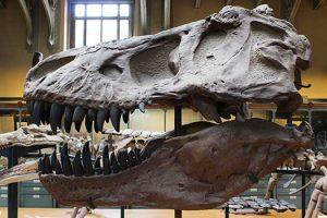 Dinosaurs topic books for EYFS, KS1 & KS2